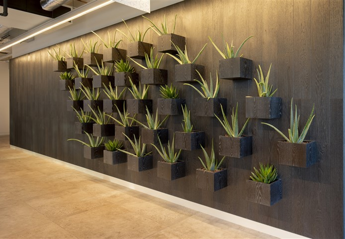 Hakwood Eclipse flooring on the wall with design flower boxes